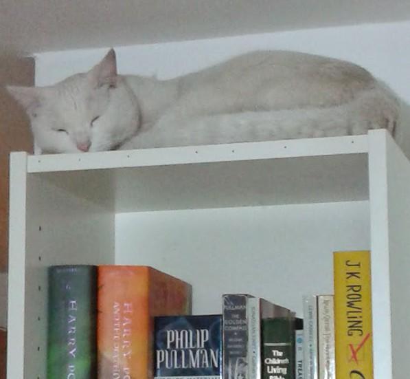 bookstips1.jpg